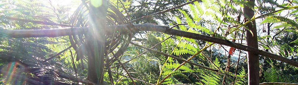 greenwood spiral